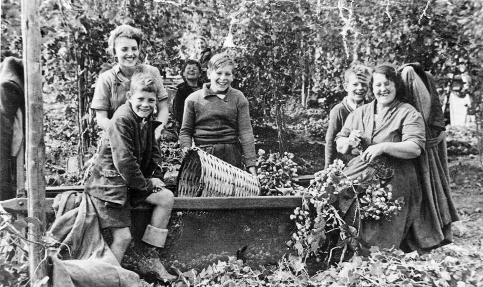 A family of 5 young children with their mother hop pick in Kent in the 1950's. Everyone is smiling and they are surrounded by hop vines.